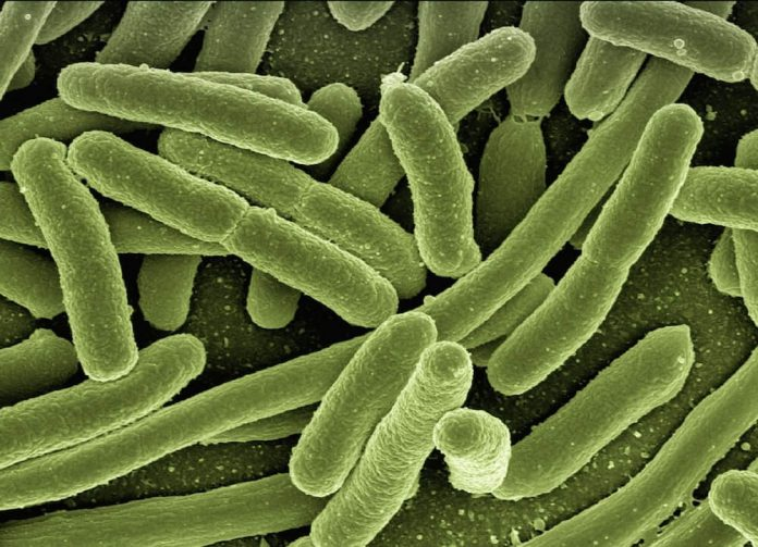 does the microwave kill bacteria